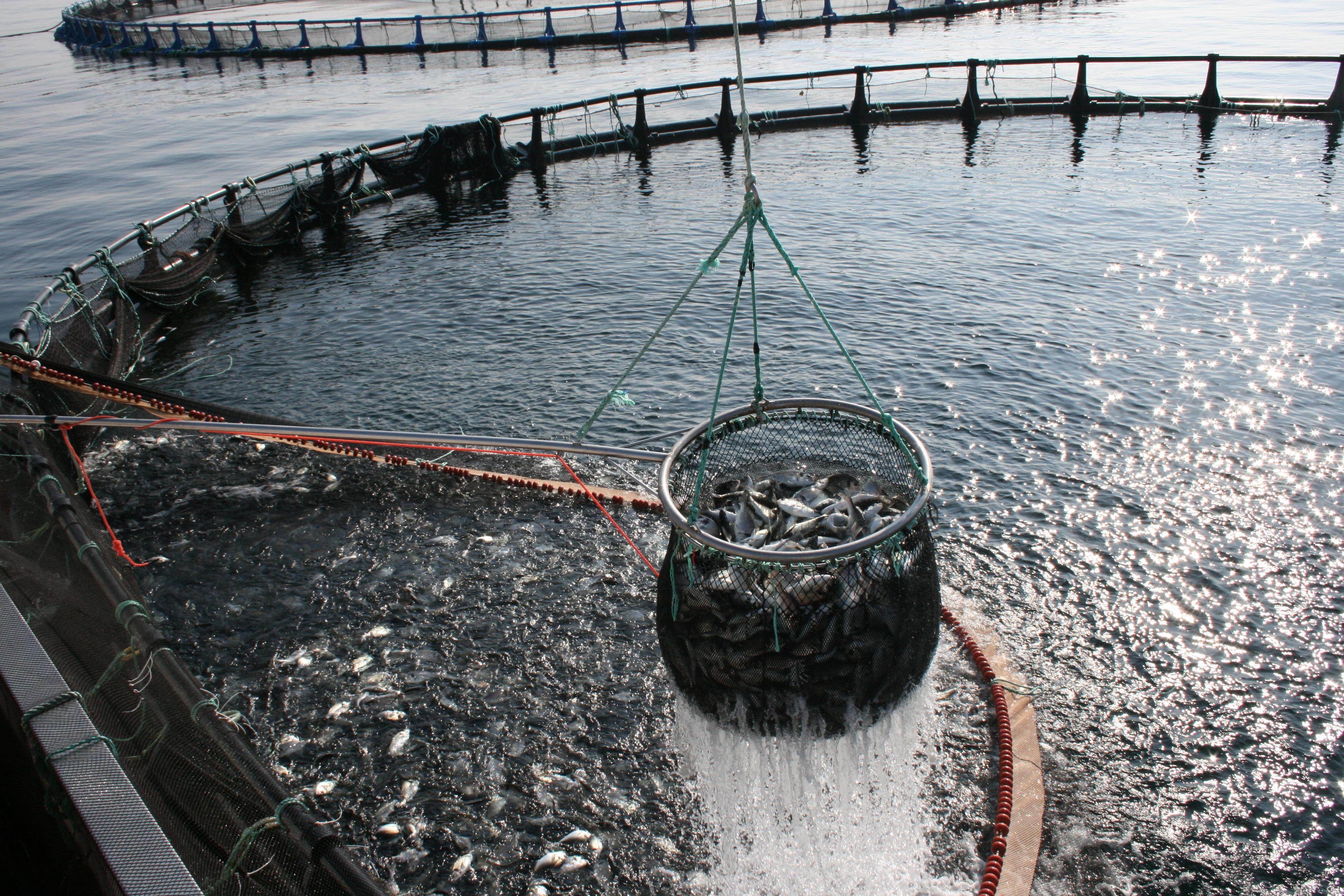 Acuicultura saboramar for Jaulas para cria de peces