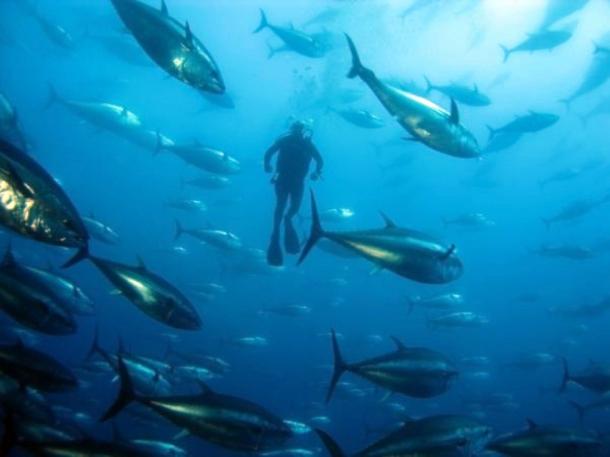 Buceo en Cabo de Gata