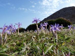 Naturaleza en Cabo de Gata