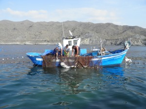 Pesca en Villaricos